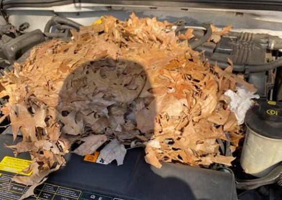 rat nest_Tengler